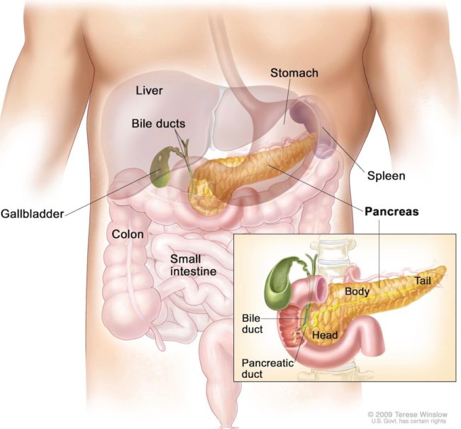 image of the pancreas