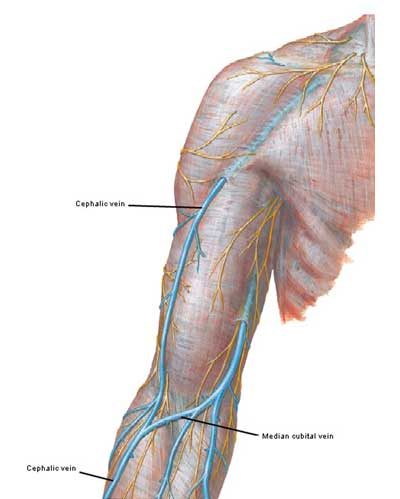 Illustration Outlander Anatomy
