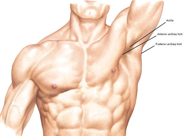Arms! Arms! Arms! – Redux – Outlander Anatomy