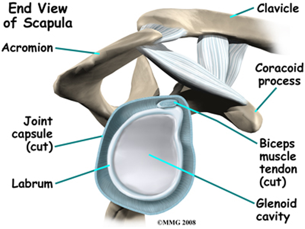 Shoulder labrum anatomy