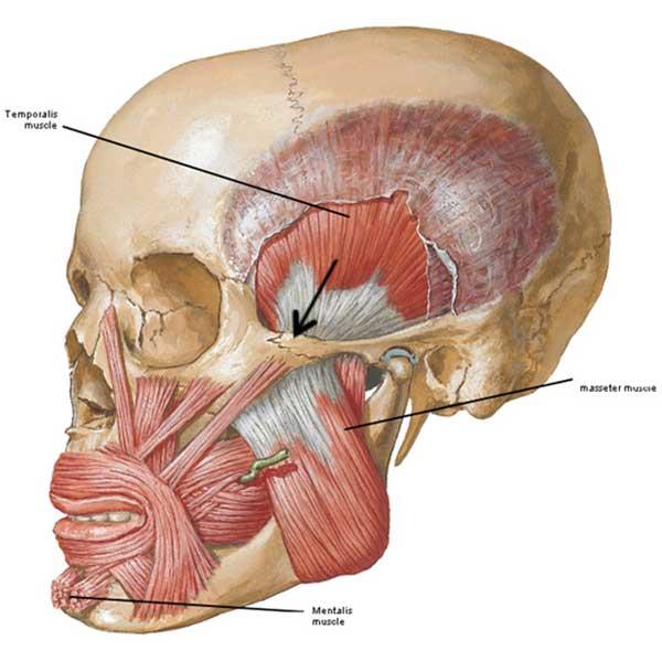 chin outlander anatomy