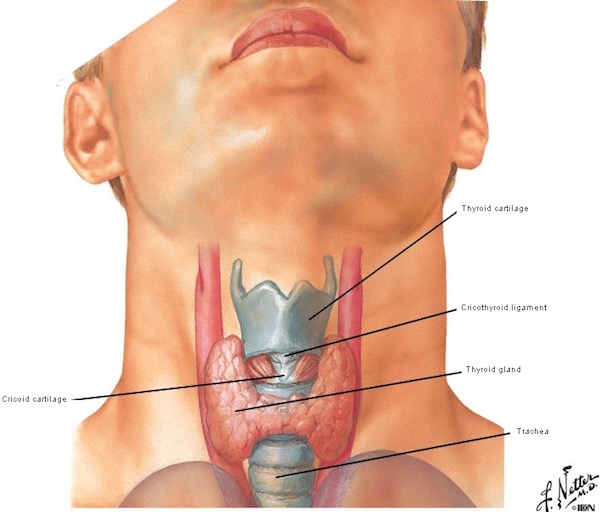 Larynx Throat 106