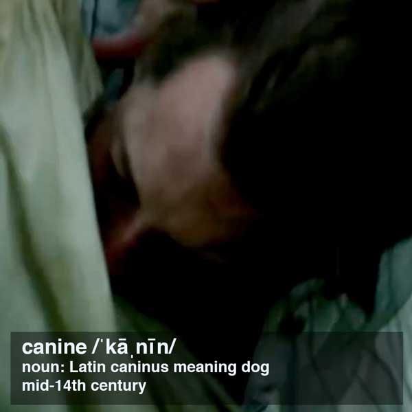 Fun Fact Canine Teeth Outlander Anatomy