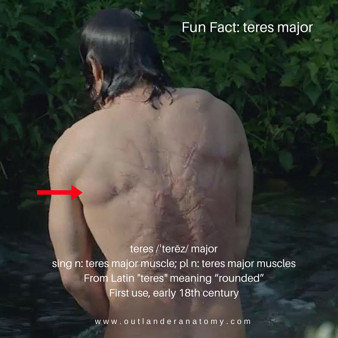 Fun Fact: teres major – Outlander Anatomy