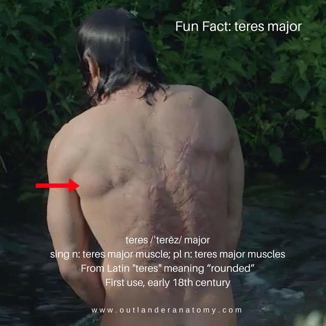 Fun Fact Teres Major Outlander Anatomy