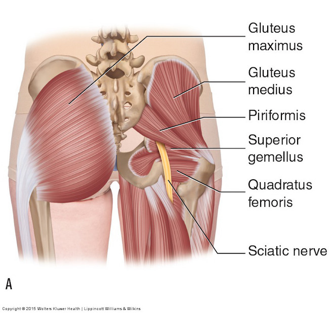 Anatomy Lesson #58: Needles, Nerves and Penicillin! – Outlander Anatomy