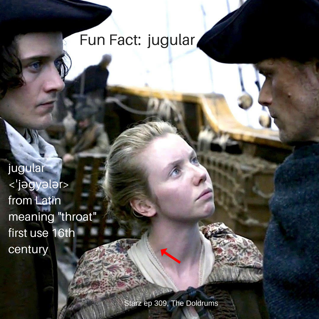 Fun Fact: External Jugular Vein – Outlander Anatomy