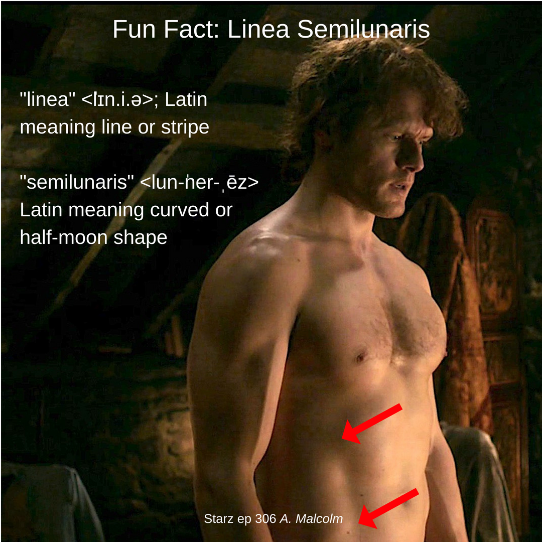 human anatomy – Outlander Anatomy